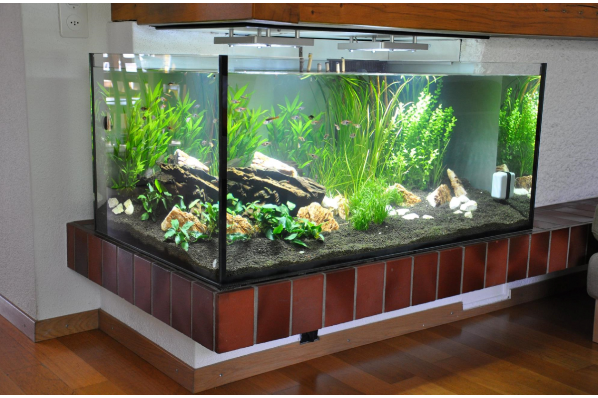 einen aquaristik geschäft