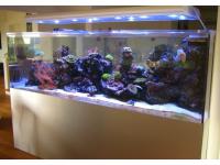 Sea Planet Custom Aquariumbau 2500 Liter Raumtrenner