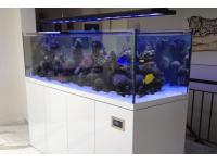 Sea Planet Custom Aquariumbau Süsswasser