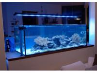 Sea Planet Custom Aquariumbau